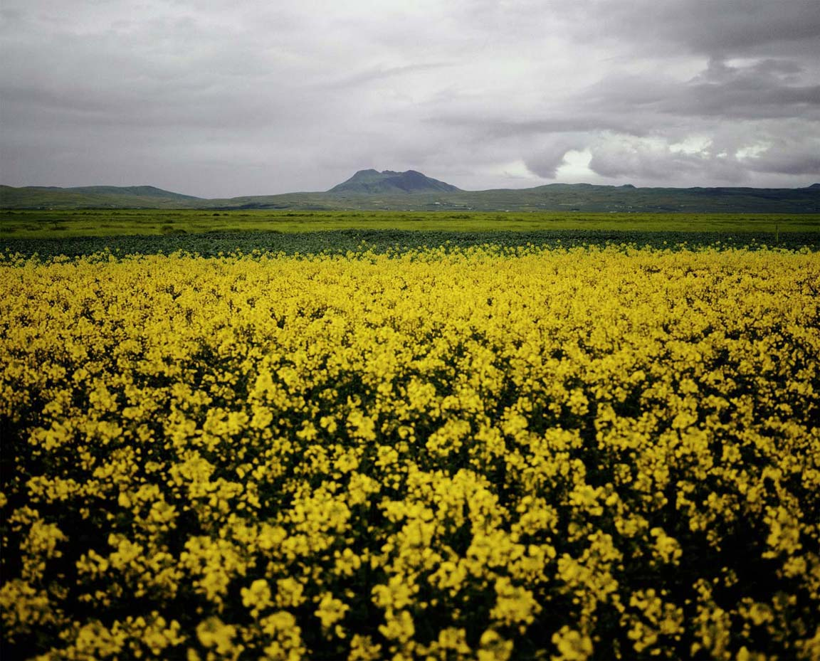 07_Yellow Field.jpg